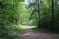 Forêt domaniale de Bois-d'Arcy 58.jpg