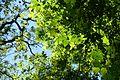 Forêt domaniale de Meudon @ Meudon (27710598373).jpg