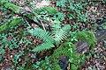 Forest @ Roc de Chère @ Talloires (35606154426).jpg