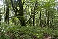 Forest in Doshi 11.jpg