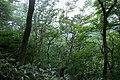 Forest in Mt.Futatsuya 05.jpg