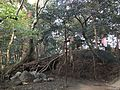 Forest of Sumiyoshi Shrine 6.jpg