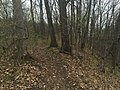 Forestpath1.jpg