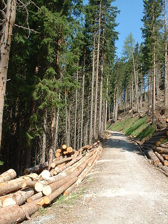 Forestry - Forestry work in Austria