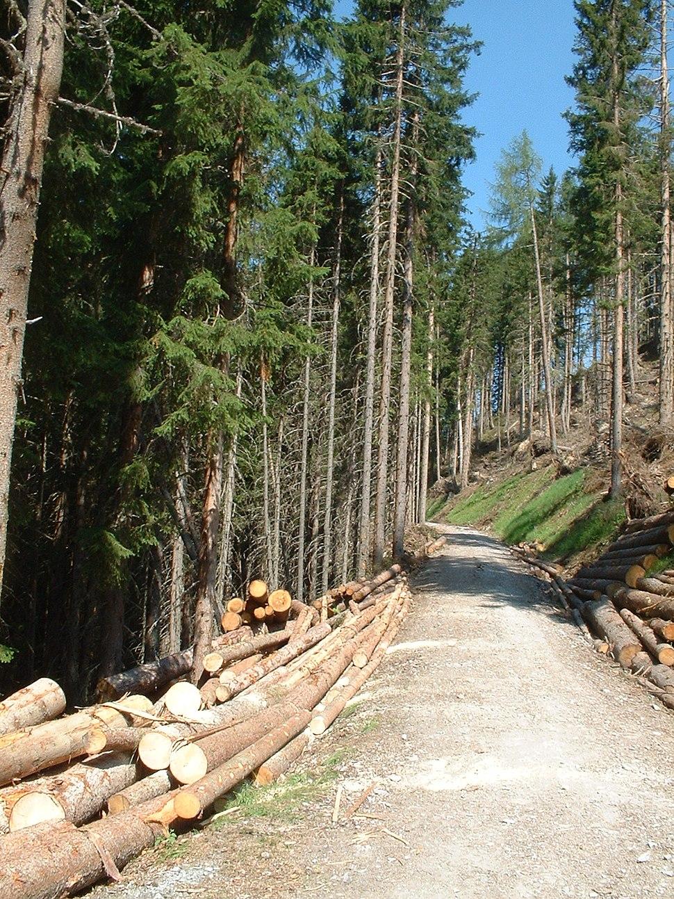 Forstarbeiten in Österreich