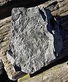 Fossilien Ensdorf (2).jpg