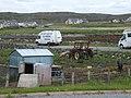 Free-range pigs near Calanais - geograph.org.uk - 1359235.jpg