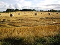 Freshly harvested wheat field - geograph.org.uk - 508690.jpg