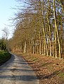 Fridhill Wood - geograph.org.uk - 384605.jpg
