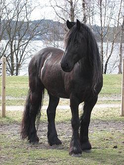Frisian Horse.JPG