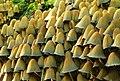 Fungus, Crawfordsburn Glen (22) - geograph.org.uk - 976846.jpg