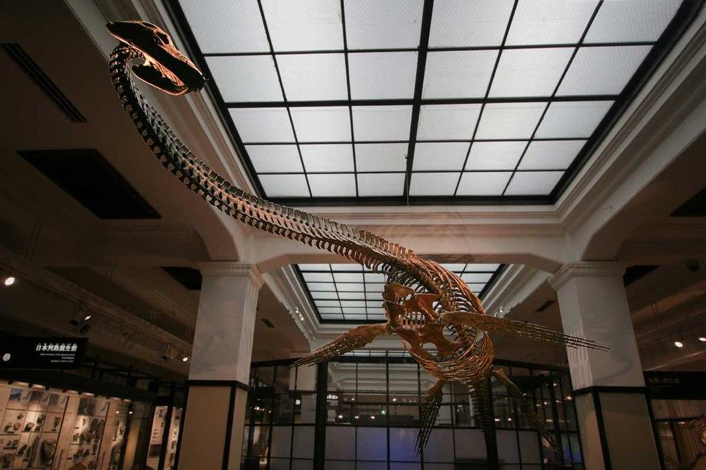 フタバスズキリュウの化石