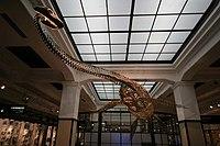 Futabasaurus.jpg