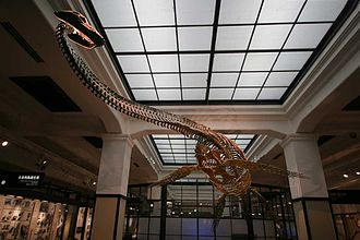 National Museum of Nature and Science - Image: Futabasaurus