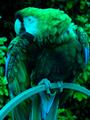 GB 16bits palette sample image.png