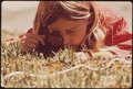GIRL USES A MAGNIFYING GLASS TO STUDY PLANT LIFE IN THE TUNDRA OF THE ROCKY MOUNTAINS. THE DENVER PTA SPONSORED A... - NARA - 543740.tif