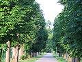 Gaštanová aleja Stupava.jpg