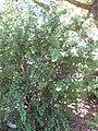 Gardenology.org-IMG 0336 rbgs10dec.jpg