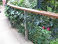 Gardenology.org-IMG 1779 hunt09oct.jpg