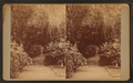 Gardens at Magnolia-on-the-Ashley, by J. A. Palmer.png