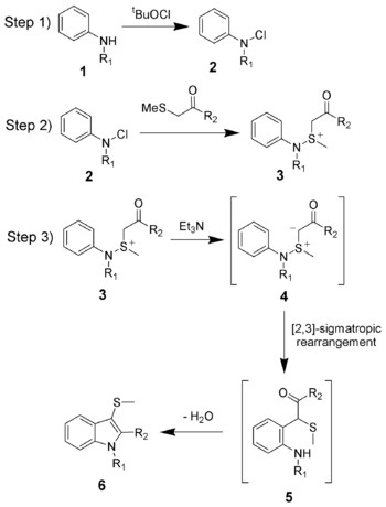 The reaction mechanism of the Gassman indole synthesis