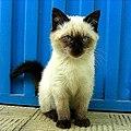 Gato. Galicia, Spain 2007 (cropped).jpg
