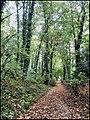 Gazzada - Parco di villa Cagnola - Complesso monumentale del XVIII secolo con parco collinare - Park Villa Cagnola - Monumental complex of the eighteenth century with hillside park - panoramio.jpg