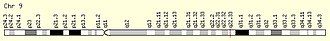 CCDC180 - The location of CCDC180 on human chromosome 9 within locus 9q22.33 is marked with a line.