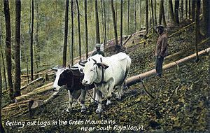 Royalton, Vermont - Logging scene c. 1907
