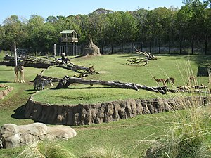 Zoo - Giants of the Savanna Exhibit at the Dallas Zoo, Texas, October 2011