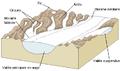 Glacial landscape FR.PNG