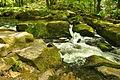 Golitha Falls (4005).jpg
