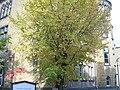 Goslar 2008 Okt PD 36.JPG