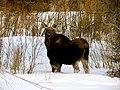 Grand Teton National Park (8478722373).jpg