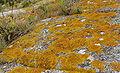 Granite breton.jpg