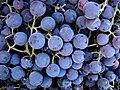 Grapes (4737199646).jpg