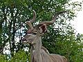 Greater Kudu (Tragelaphus strepsiceros) (13781832594).jpg