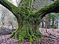 Green Giant (25423850178).jpg
