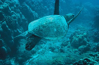 Conservation movement - A Green sea turtle