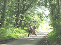 Green transport in a green zone - geograph.org.uk - 510066.jpg
