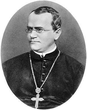 Modern synthesis (20th century) - Gregor Mendel proposed a system of inheritance based on 2 alleles for each trait in the adult, segregating to 1 factor in each gamete.