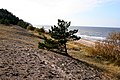 Grey dunes - panoramio.jpg
