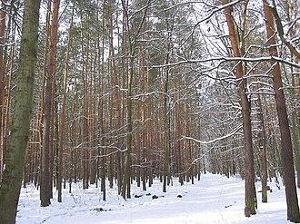 Grunewald (forest) - Image: Grunewald 1