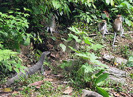 Gunung Leuser National Park Jungle Life.jpg