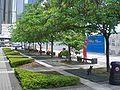 HK Plant Central City Hall Edinburgh Place Garden.JPG