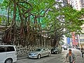 HK Sheung Wan Hollywood Road Stonewall Banyan trees n sidewalk carpark Mar-2013.JPG