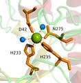 HMG-CoA-Lyase magnesium.png