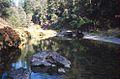 Hayfork Creek.jpg