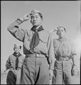 Heart Mountain Relocation Center, Heart Mountain, Wyoming. Boy Scouts conducting a morning flag rai . . . - NARA - 537165.tif