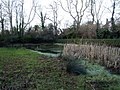 Hedon Pond, Ivy Lane - geograph.org.uk - 674814.jpg